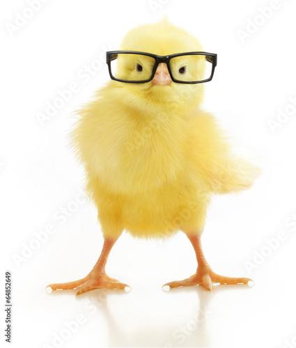 Leinwanddruck Bild Cute little chicken in glasses