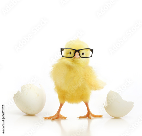 Foto op Plexiglas Egg Cute little chicken coming out of a white egg