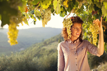 woman harvesting grapes under sunset light