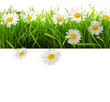 Banner with grass and flowers isolated on white