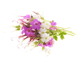 geranium macrorrhizum blossoms ,white and pink,