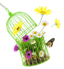 Cage with grass,flowers and insects isolated on white