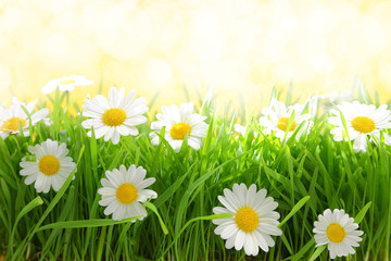 White flowers with grassy field on sunshine © viperagp