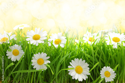 White flowers with grassy field on sunshine