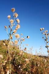 Flower grass against blue sky