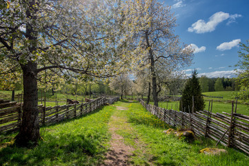 Springtime in Sweden - a sunny day in Småland in early May