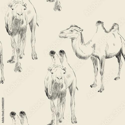hand drawn camel - 64860239