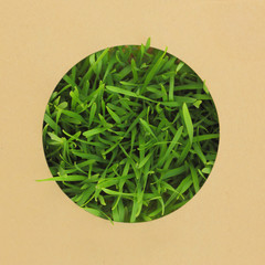 Paper with round hole in the middle with grass
