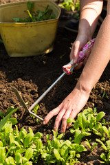 weeding spring flower bed maintenance, gardening