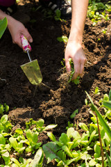 weeding - spring flower bed maintenance, gardening