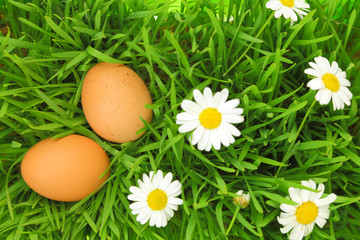 Two fresh eggs on green grass with white flowers
