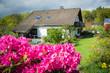 Rhododendron im Garten mit Haus