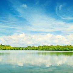 Equatorial mangroves