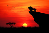 Lion on rope at sunset