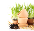 Green grass in flowerpots and gardening tools, isolated on