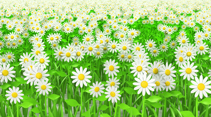 Grass green with flowers isolated