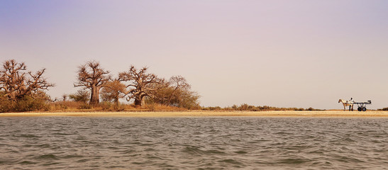 Parc national du delta du Sine Saloum (Sénégal)