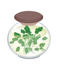 A Jar of Delicious Pickled Green Watercress