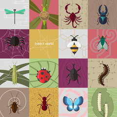 Insect world