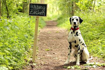 """Warnschild """"Achtung Zecken"""" mit Hund, Waldweg"""