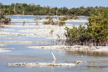 Zapata National Park, Cuba  - swamp mangrove