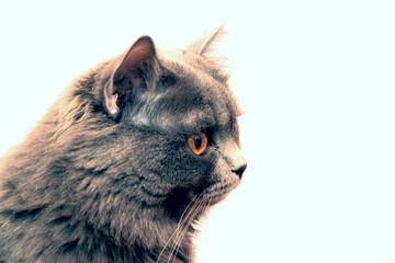 Завораживающий кот