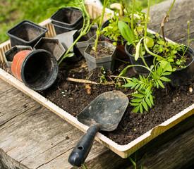 Gartenarbeit - Aussetzen junger Pflanzen