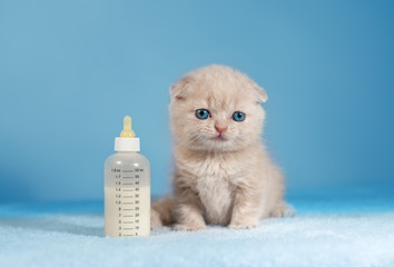 Cute little kitten sitting near the nipple with milk