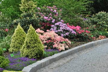 Rododendrony w ogrodzie