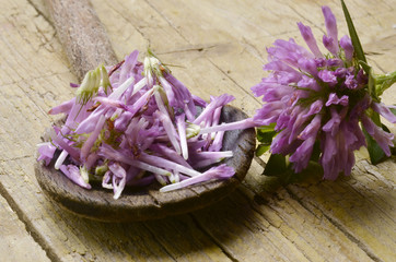 Trifolium シャジクソウ属 Trèfle Koniczyna Клевер Here