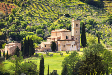 Sant Antimo Montalcino church and olive tree. Orcia, Tuscany, It