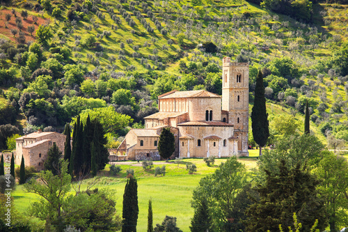 Sant Antimo Montalcino church and olive tree. Orcia, Tuscany, It - 64885875