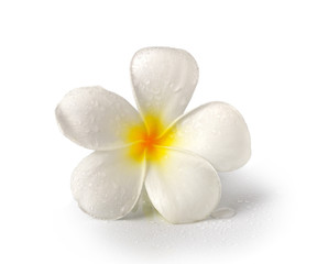 Tropical flowers frangipani (plumeria) isolated on white backgro