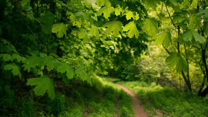 Footpath in the forest. RAW on dslr.