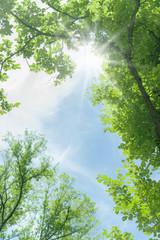 新緑 晴天 太陽