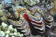 brown giant clam close up portrait