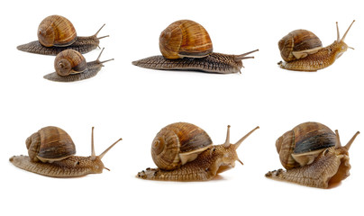 snails isolated
