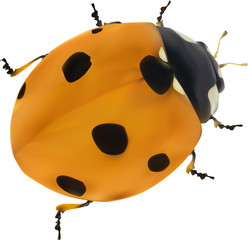 illustration with orange seven ponts ladybug on white