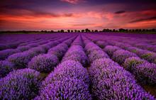 Magnifique paysage avec un champ de lavande au coucher du soleil