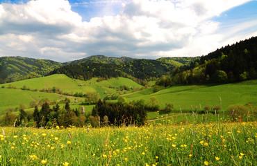 Tal im Südschwarzwald
