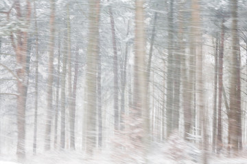 Heavy Snow in Woods