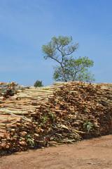pile up of eucalyptus trees