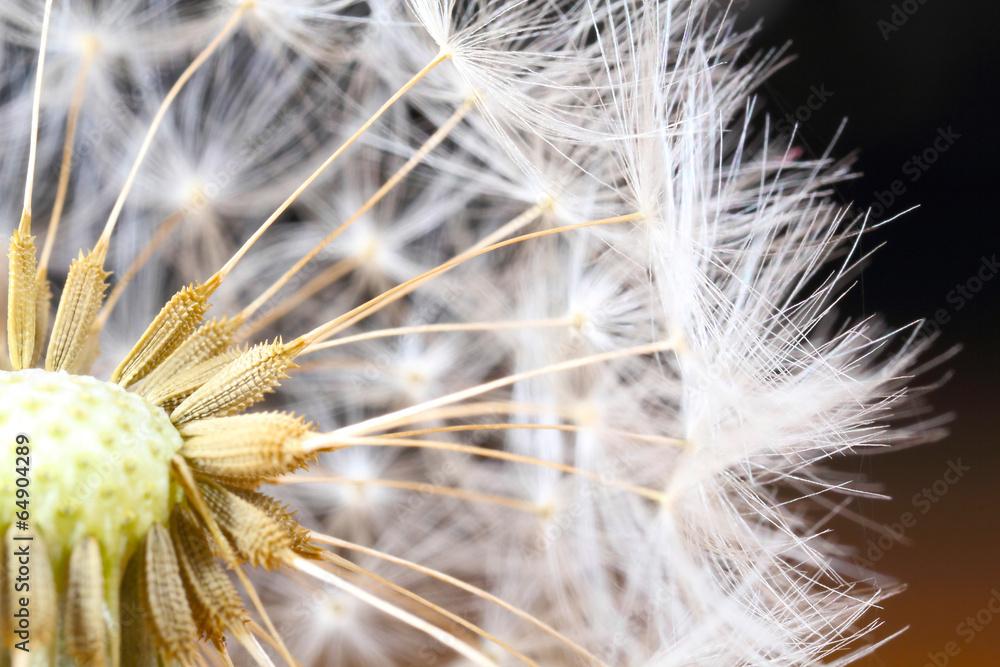 kwiat lot nasienie - powiększenie