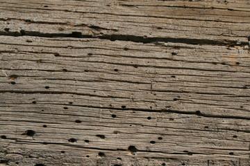 Baumstamm Holzwurm