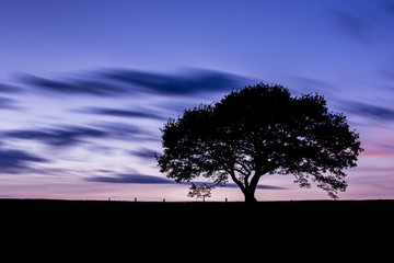 tree silhouette in sunset at the eifel