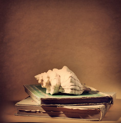 shell and stack of books