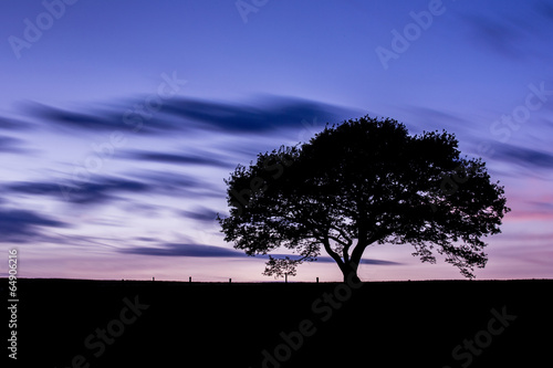 canvas print picture tree silhouette in sunset at the eifel