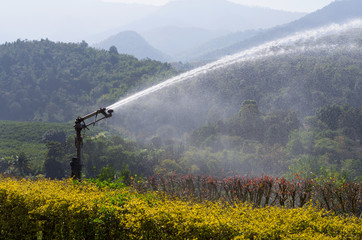 water sprinkler in orange field