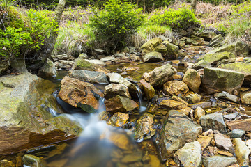 Wildbrook at the national park hautes fagnes