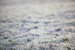 canvas print picture - Wiese Reif Winter Gras
